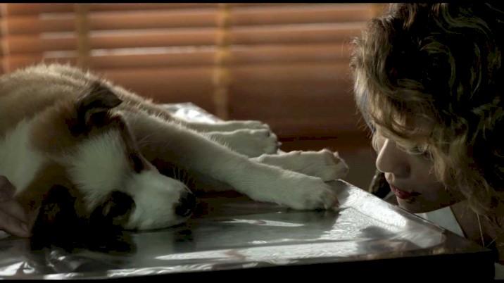 Mato sem Cachorro - Trailer Oficial